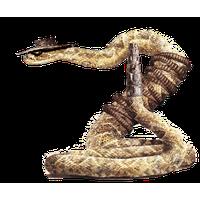 Rattlesnake PNG - 19714