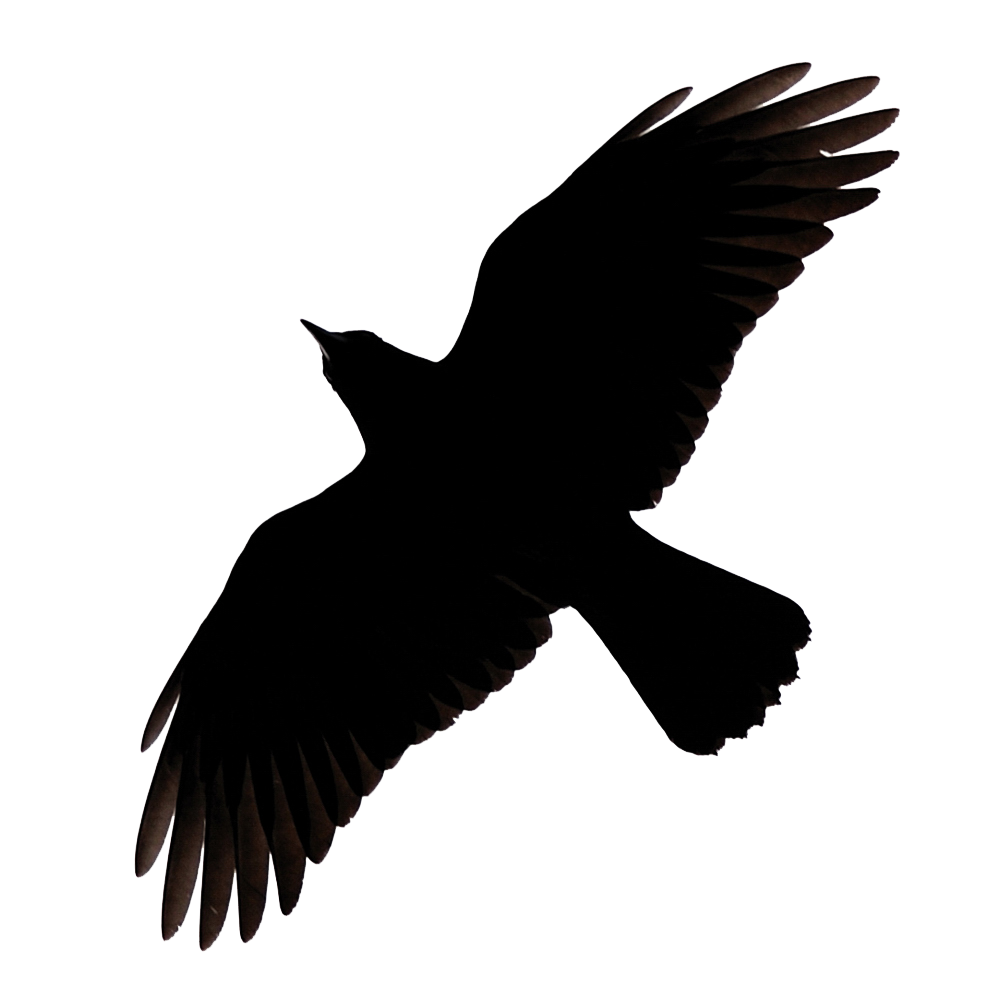 Raven PNG - 4073
