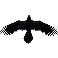 Raven PNG - 4086