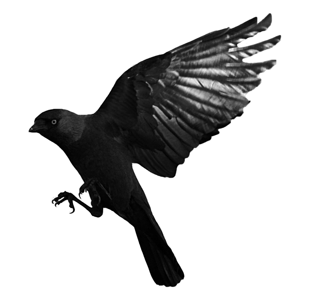 Raven PNG - 21283