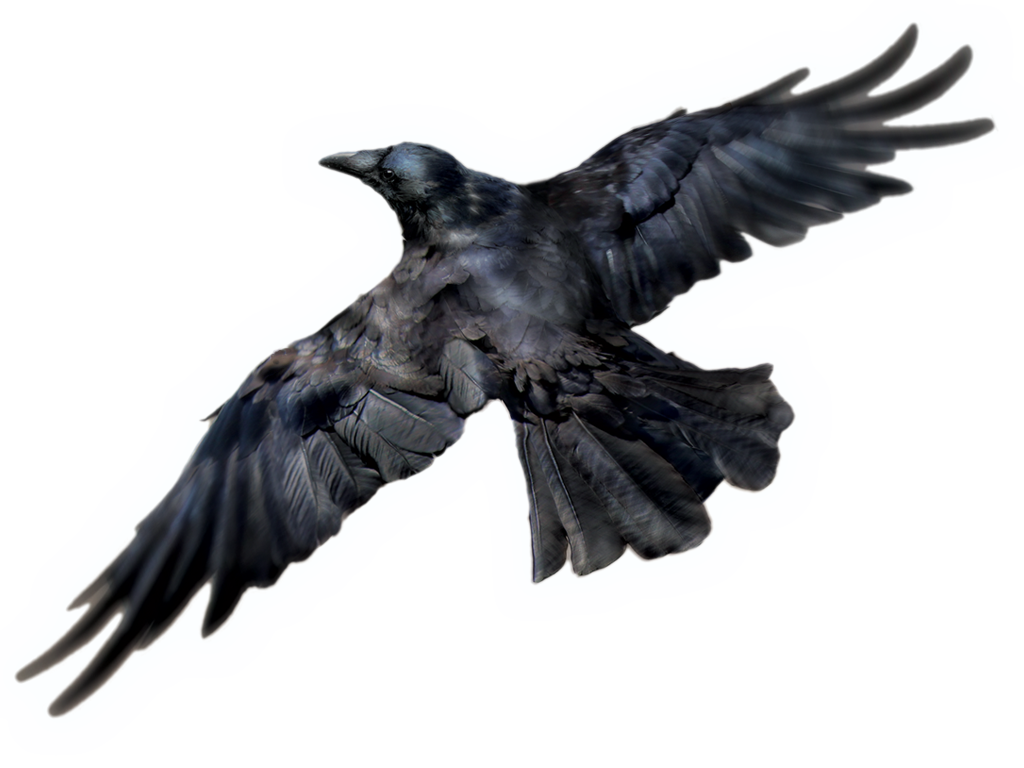Raven PNG - 4070