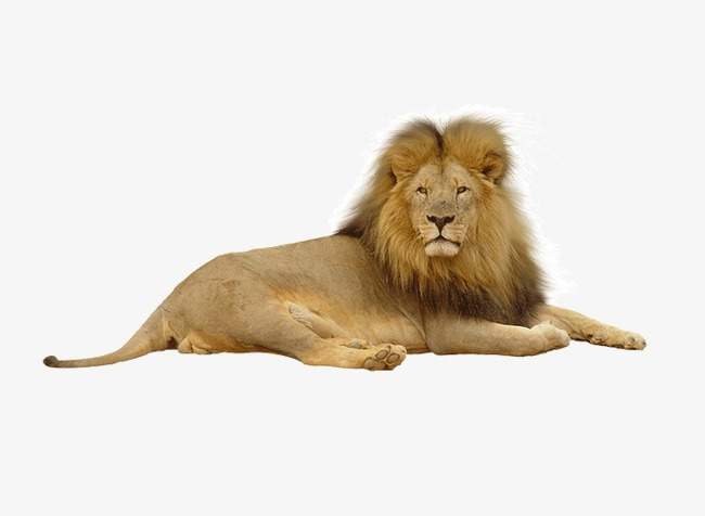 real animal products, Lion, Product Kind, Animal PNG Image and Clipart - Real Animal PNG