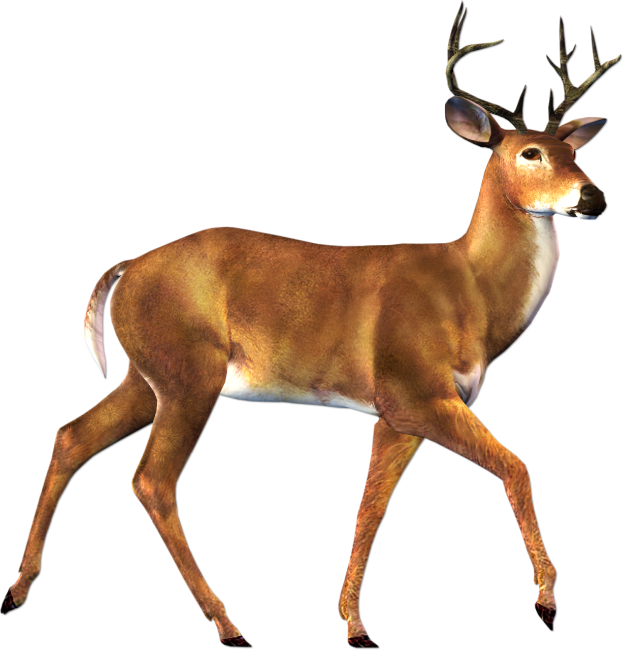 Real Animals Clipart Deer Clipground - Real Animal PNG