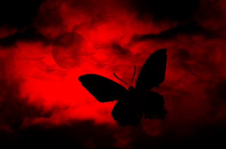 Black - Red And Black Butterfly PNG