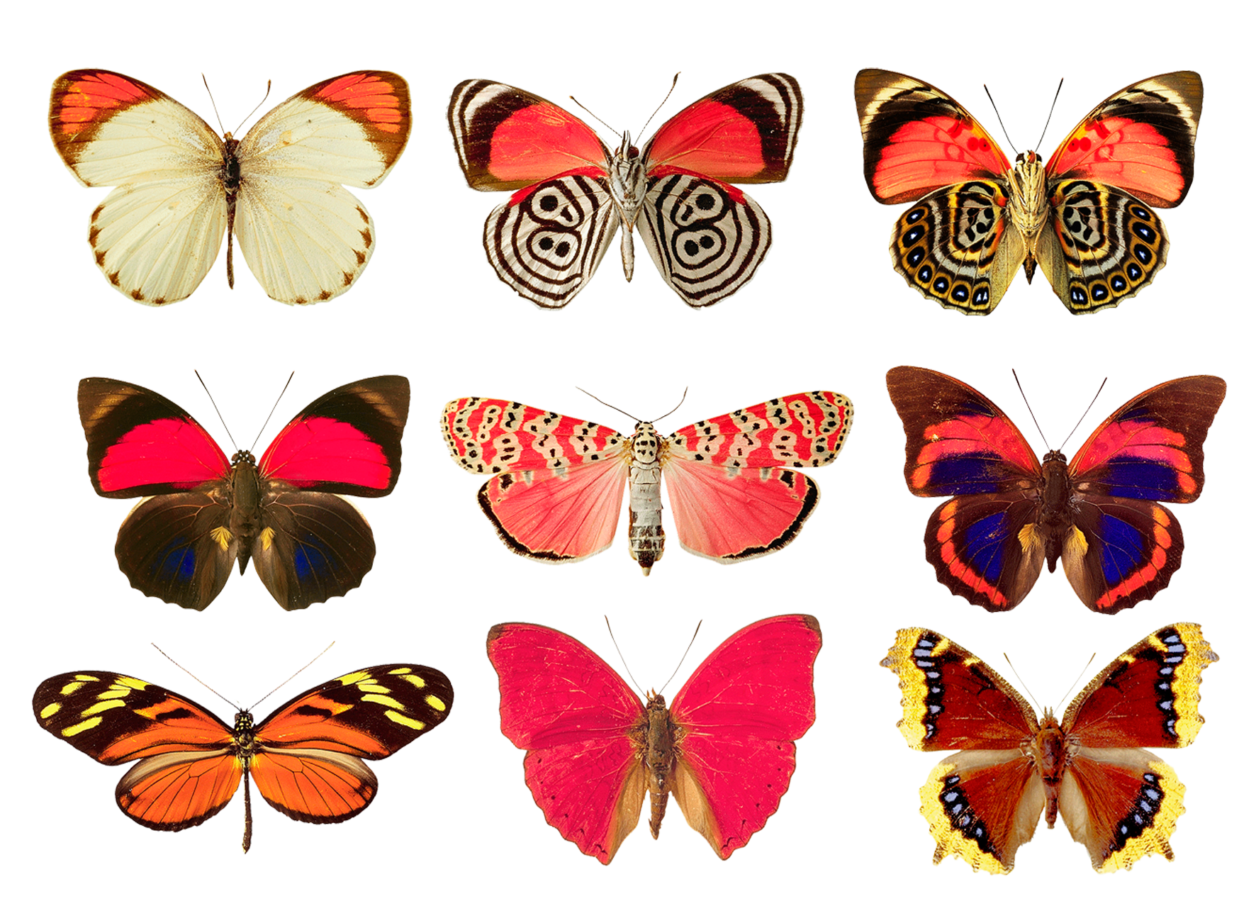 Butterflies png by AbsurdWordPreferred - Red And Black Butterfly PNG