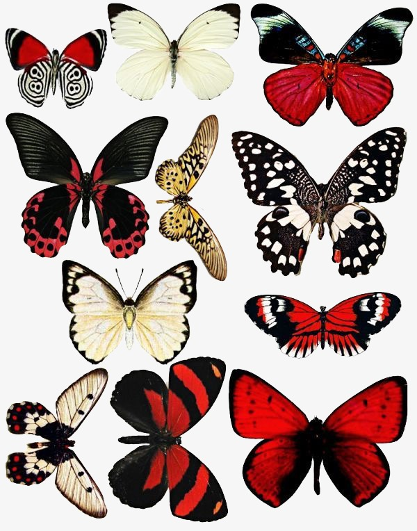 butterfly, Black Butterfly, Red Butterfly PNG Image and Clipart - Red And Black Butterfly PNG