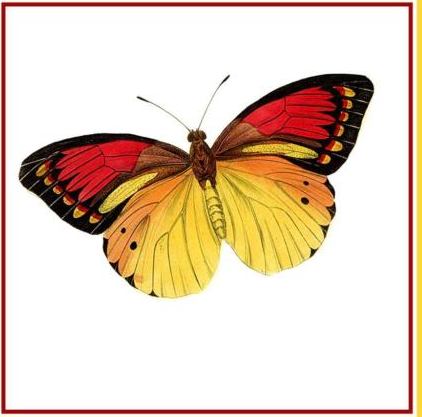 Butterfly · Colorful Gold Red and Black Butterfly - Red And Black Butterfly PNG