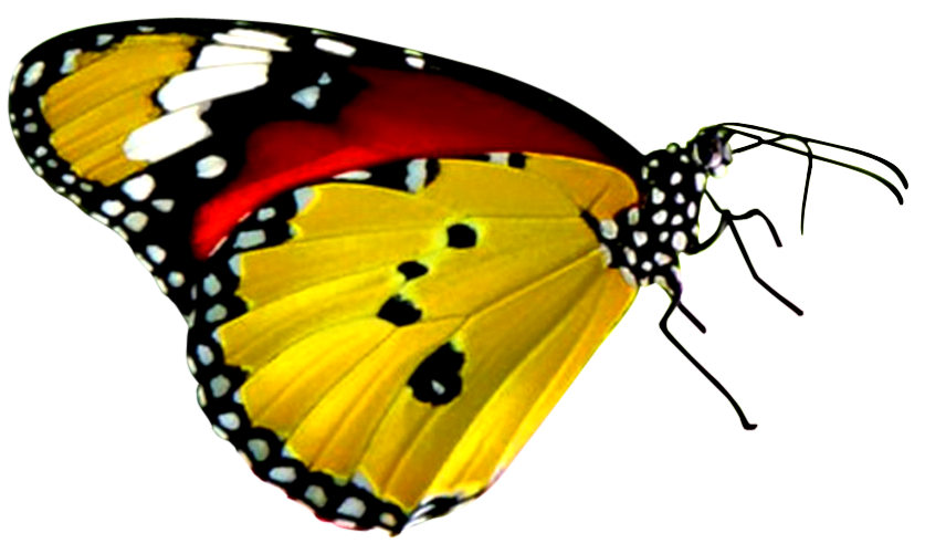 download png Balloon image - Red And Black Butterfly PNG