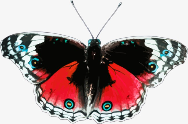 red and black butterfly vector, Butterfly, Red, Black PNG and Vector - Red And Black Butterfly PNG