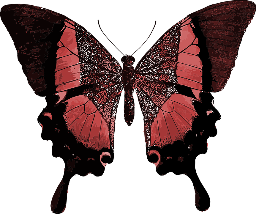 Red Butterfly Colorful Pretty Animal Insec - Red And Black Butterfly PNG