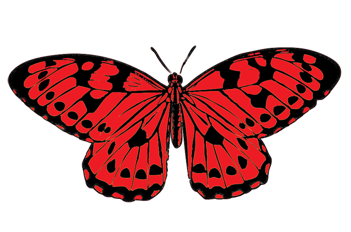 tropical butterfly image, red and black butterfly clipart - Red And Black Butterfly PNG