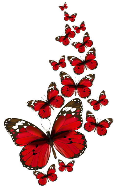 Twitter. Butterfly ImagesRed ButterflyButterfly Black PlusPng.com  - Red And Black Butterfly PNG