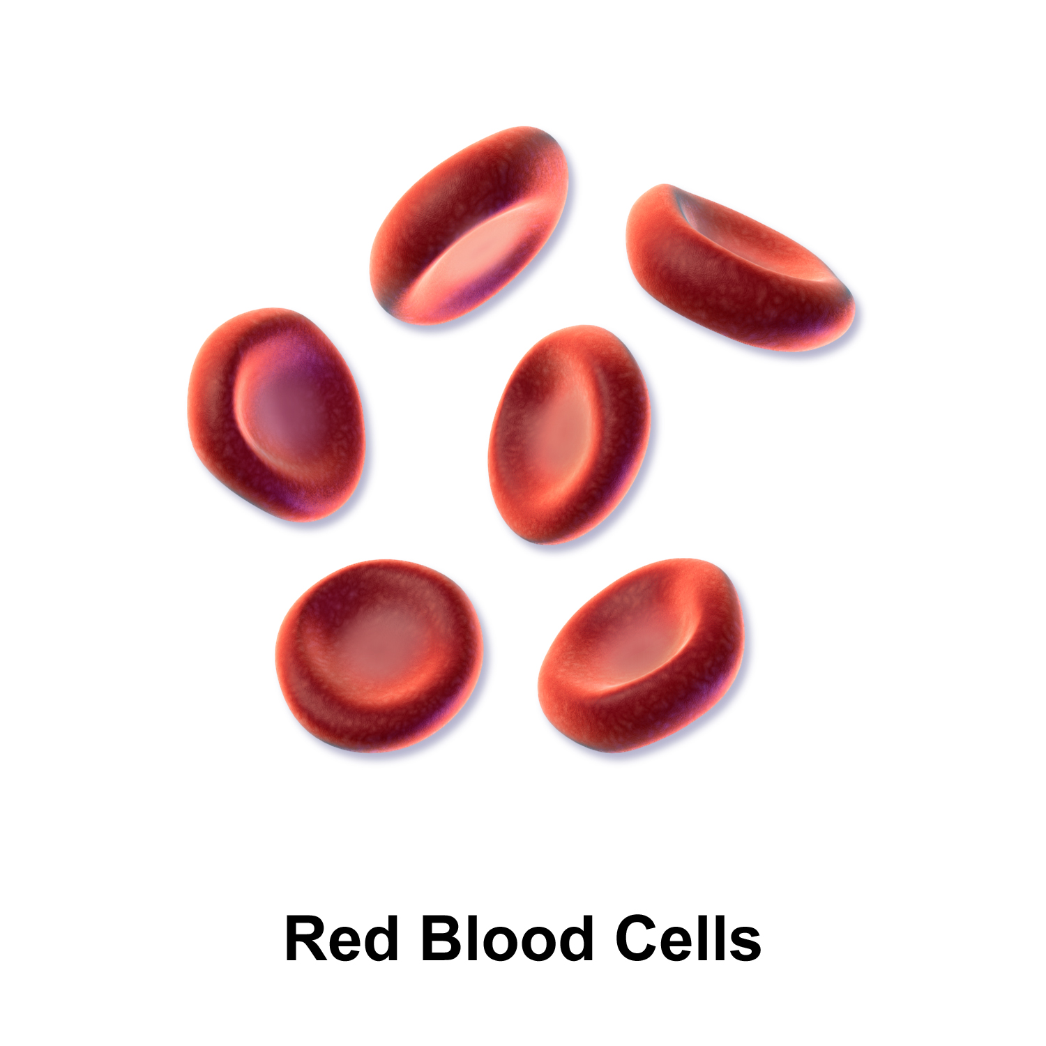 Red Blood Cell PNG - 141295