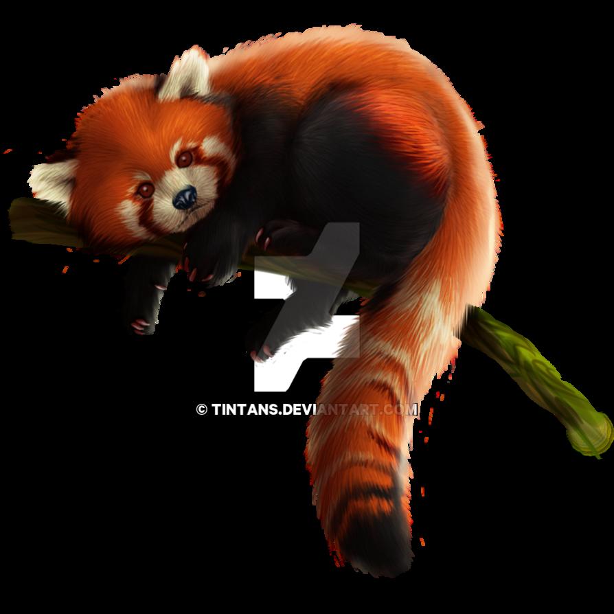 Red Panda PNG - 9379