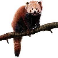 Huge item redpanda 01.png - Red Panda PNG
