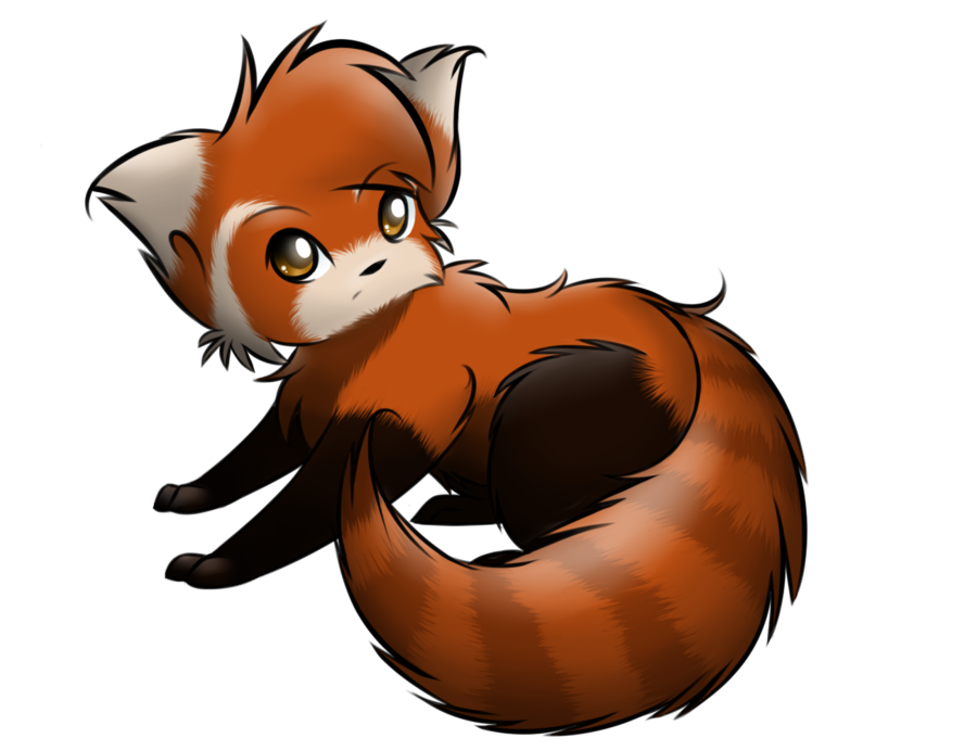 red panda drawing - Red Panda PNG