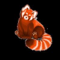 Red Panda PNG - 9383