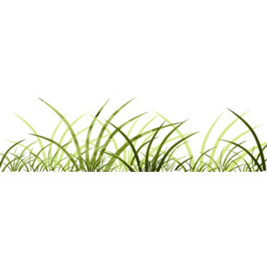 Behind the reeds by Tinette (9).png - Reeds PNG