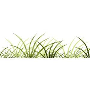 Reeds PNG - 75527