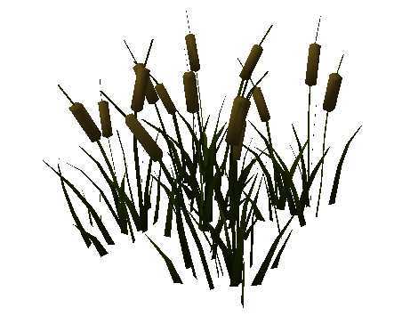 File:River reed.png - Reeds PNG