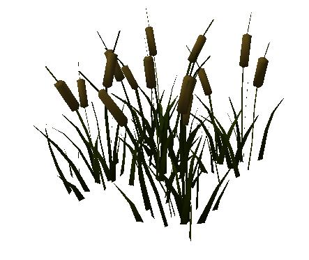 Reeds PNG - 75521