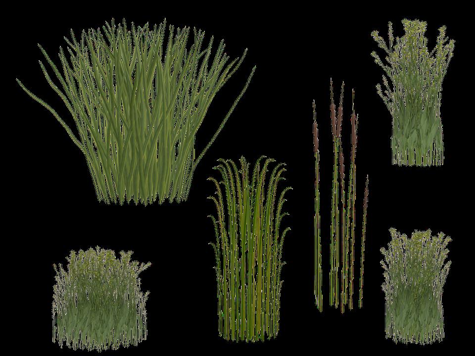 Reeds PNG - 75516
