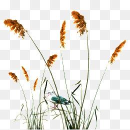 Reeds PNG - 75518