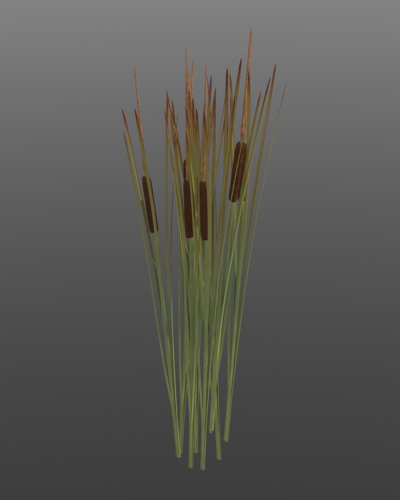 Reeds PNG - 75532