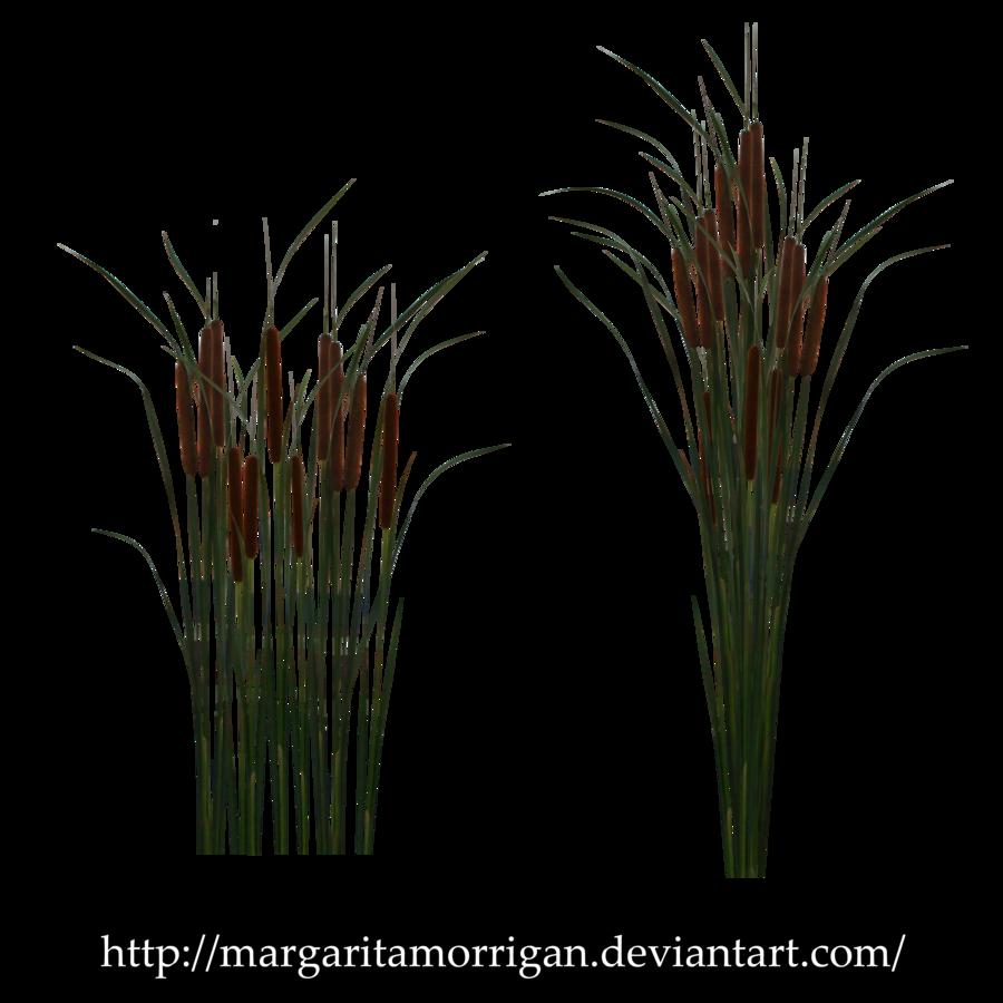 Reeds PNG - 75517