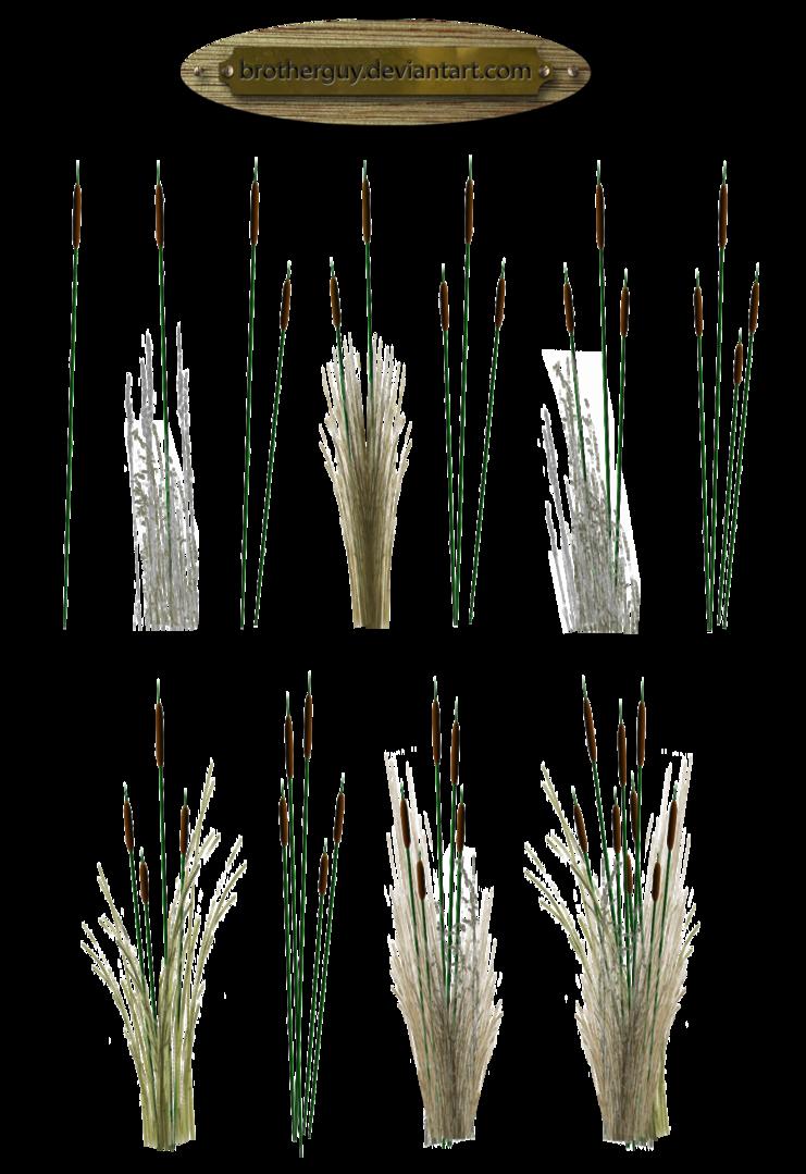Reeds PNG - 75523