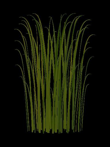 Reeds PNG - 75529