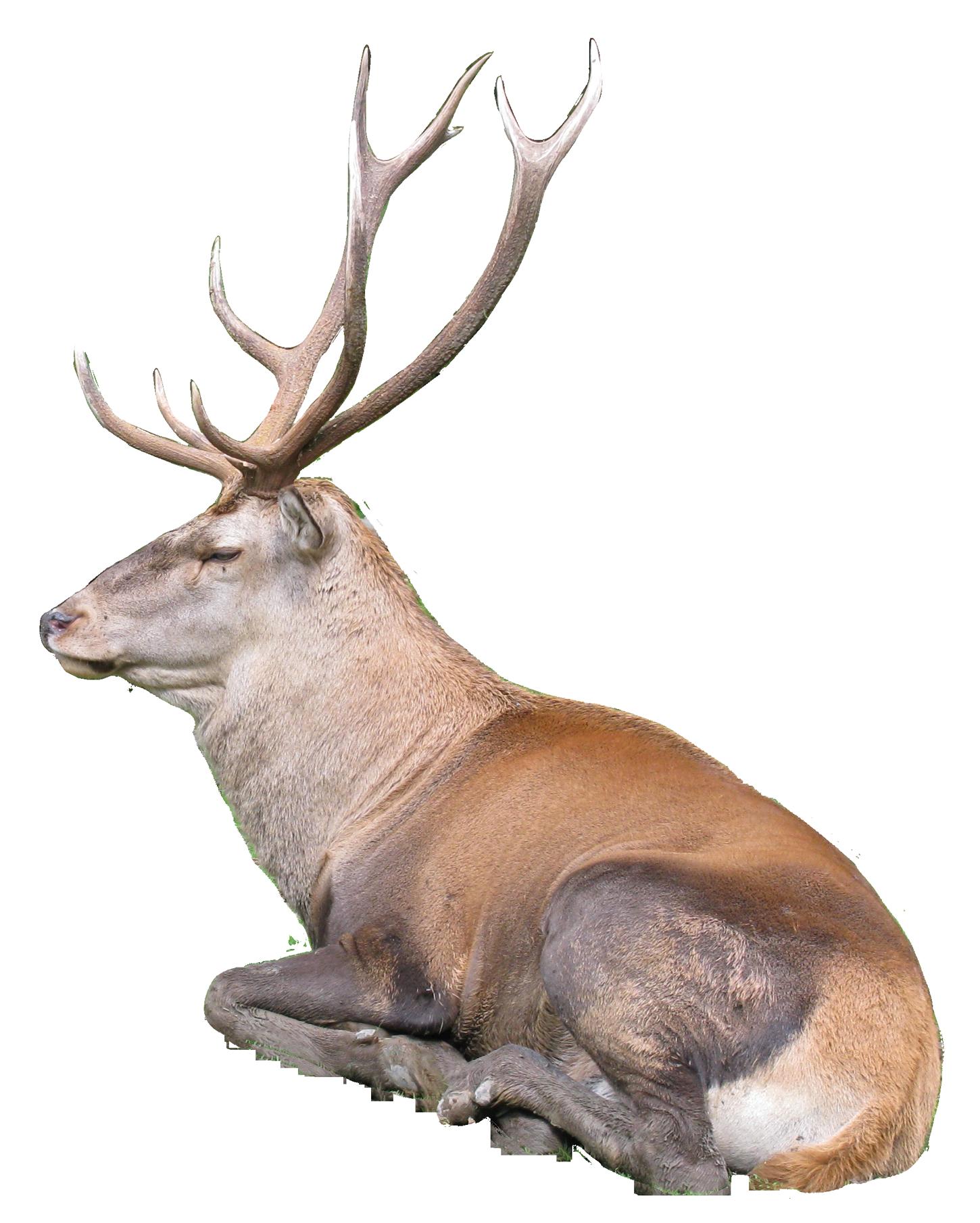 Reindeer PNG - 26226