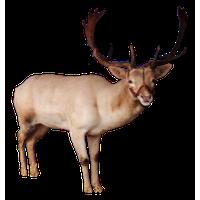Reindeer PNG - 26227