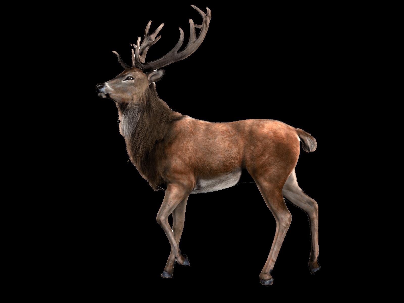 Reindeer PNG - 26223