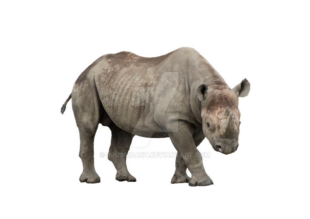 African rhino on a transparent background. PNG by PRUSSIAART PlusPng.com  - Rhino HD PNG
