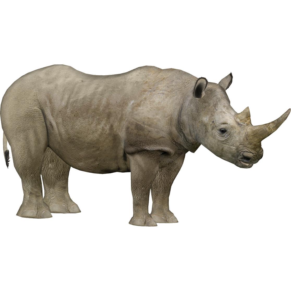 Northern White Rhinoceros (Zerosvalmont).png - Rhino HD PNG