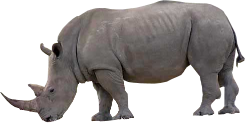 Rhino PNG - Rhino HD PNG