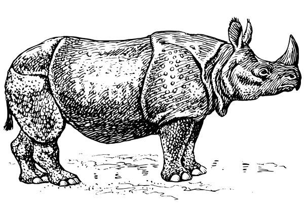 Rhino PNG Black And White - 60899