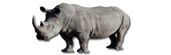 Rhino PNG Black And White - 60903