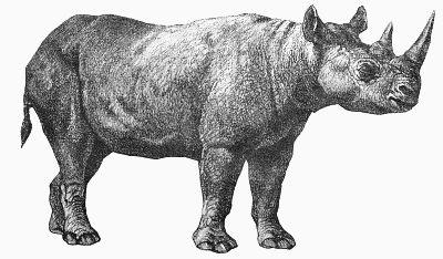 Rhino PNG Black And White - 60902