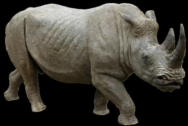 Rhino PNG HD