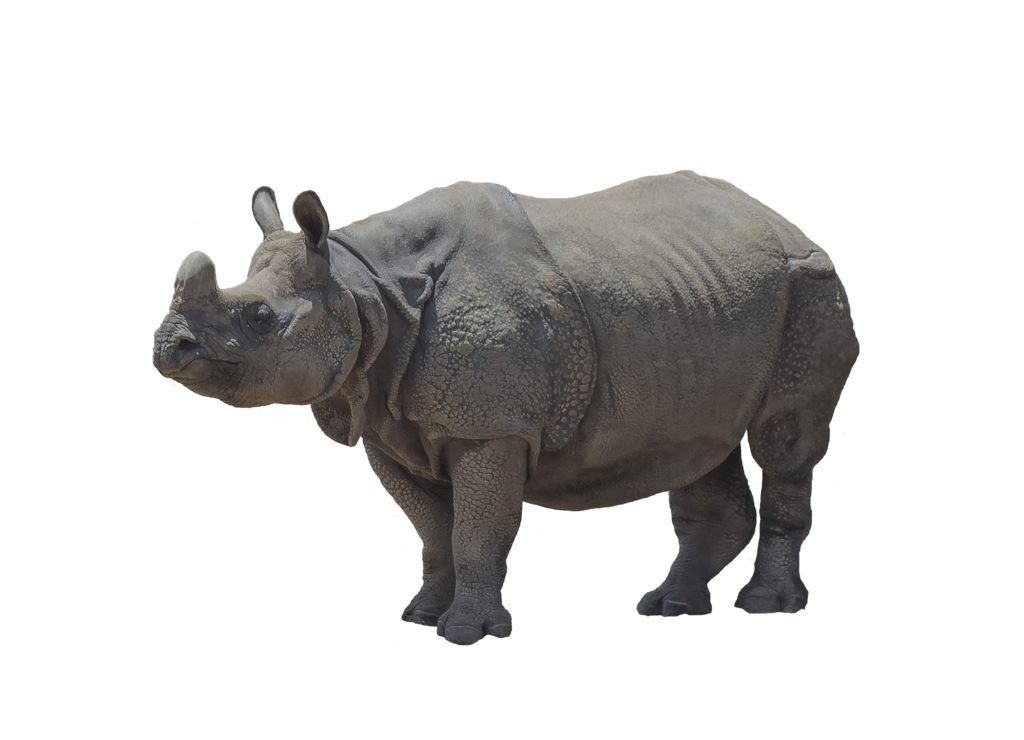 Animals stock 22 Rhinoceros 2 cut out png by LinaContre PlusPng.com  - Rhinoceros PNG