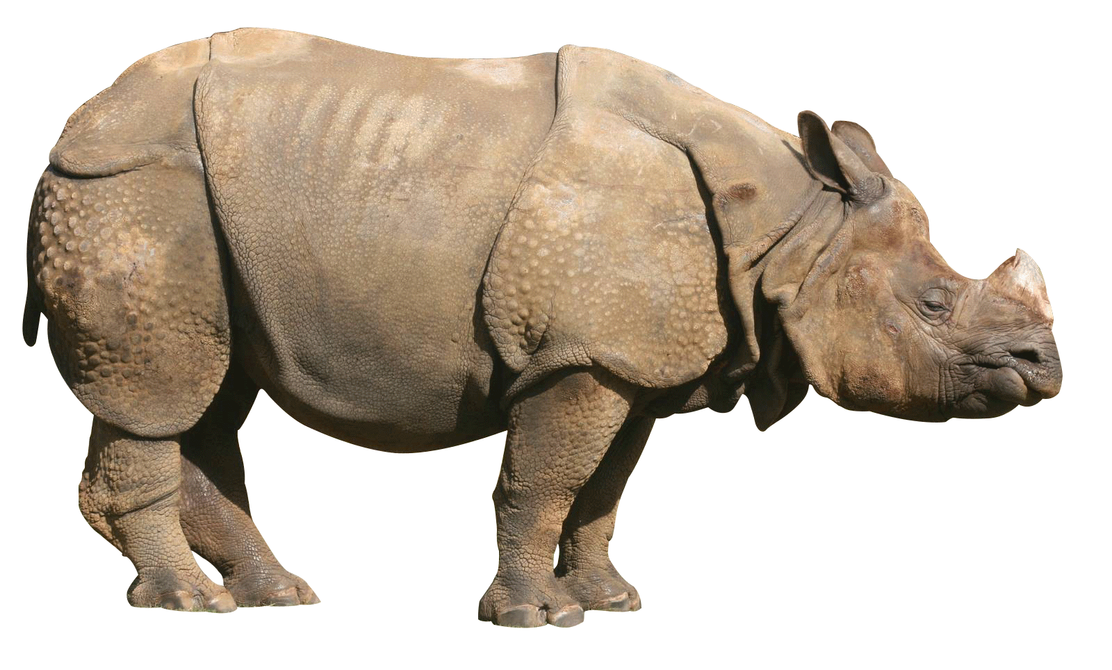Download · animals · rhinoceros - Rhinoceros PNG