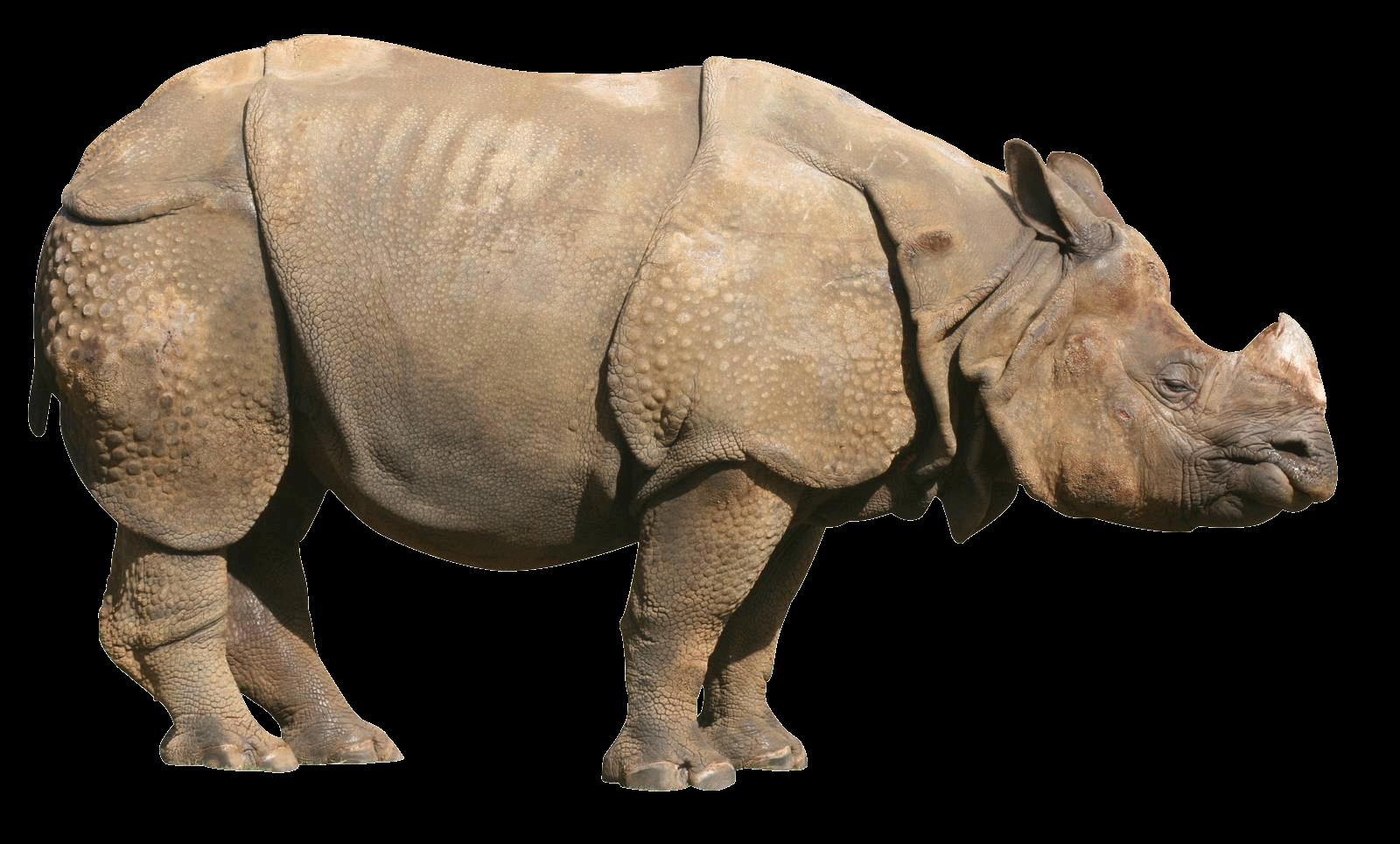 Download · animals · rhinoceros - Rhinoceros PNG