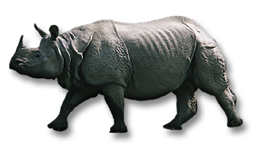 Greater One-Horned Rhino - Rhinoceros PNG
