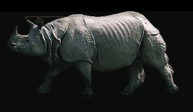 Greater One-Horned Rhino - Rhinoceros PNG