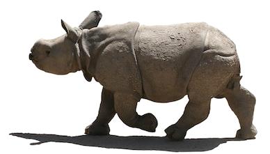 Rhino calf - Rhinoceros PNG