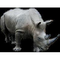 Rhinoceros Free Png Image PNG Image - Rhinoceros PNG