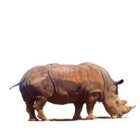 Rhinoceros Png Clipart PNG Image - Rhinoceros PNG