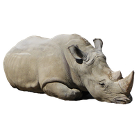Rhinoceros Png Picture PNG Image - Rhinoceros PNG
